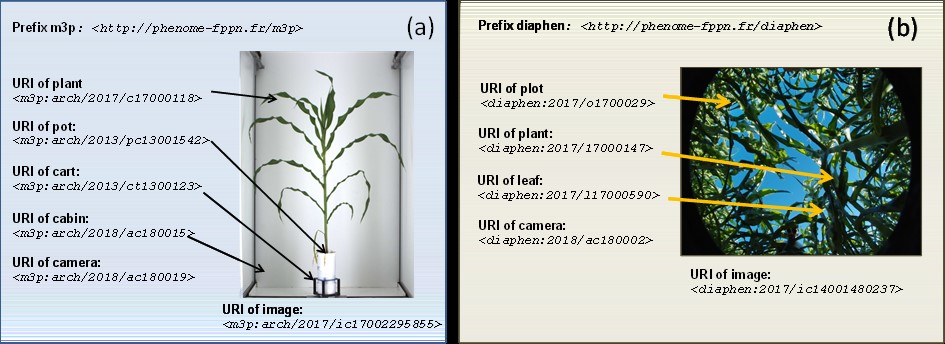 An example of the use of Unique Resource Identifiers (URIs) for identifying all objects present in single images taken in (a) greenhouse and (b) field experiments